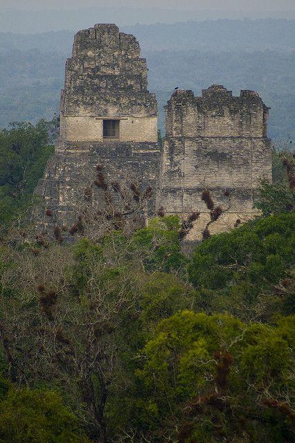 Tikal ser impresionante copa del y maya for Las construcciones de los mayas