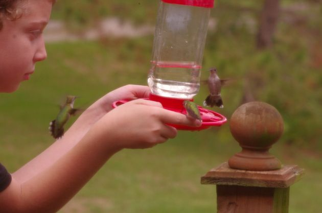 34240d36460b6cede3513fe7e32824aa - How To Get A Hummingbird To Land On Your Finger