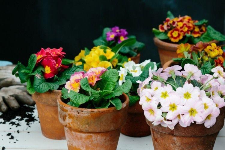 macetas con flores para terraza