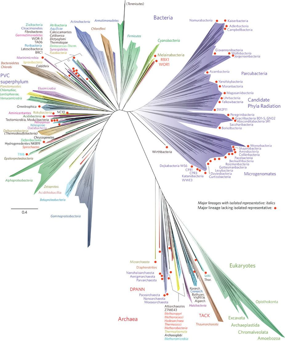 New Tree Of Life Published - And Most Of The Species On It Are A Complete Mystery To Us | IFLScience