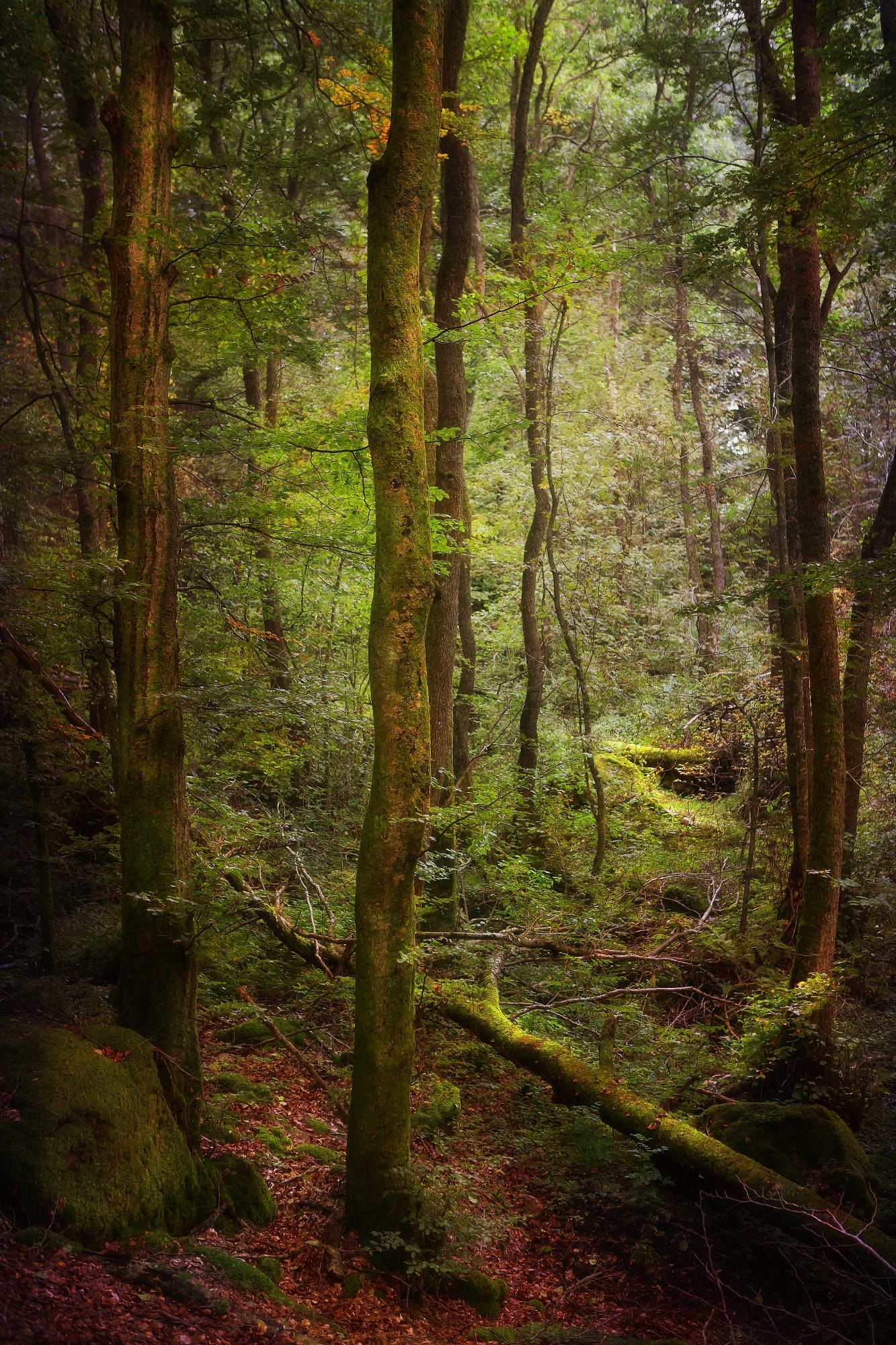 Fallen by rikard strand forest view haunted forest