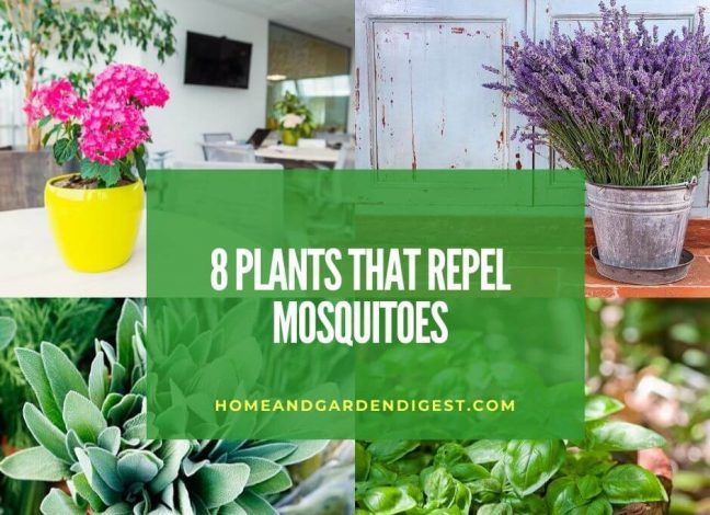Top 8 Plants That Repel Snakes Natural Snake Repellent Hdg In