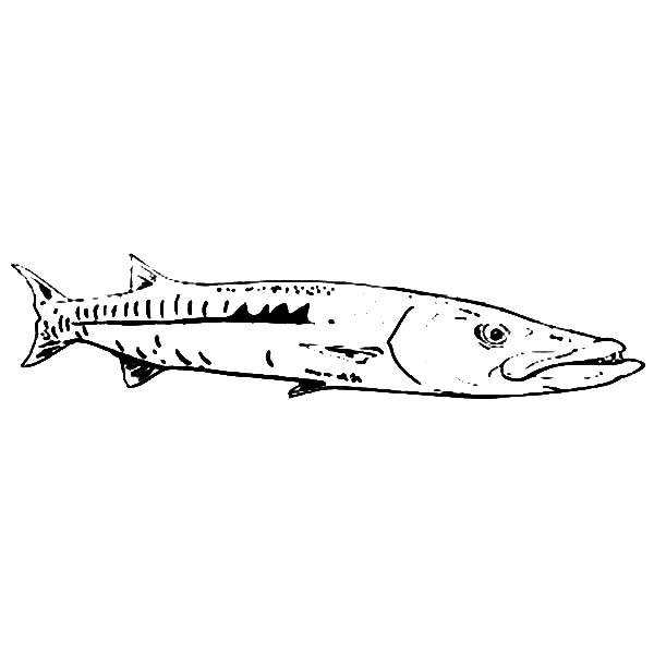 Fishing Target Barracuda Fish Coloring Pages Best Place To Color Fish Coloring Page Coloring Pages Color