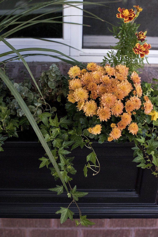Fall Window Flower Box Roomfortuesday