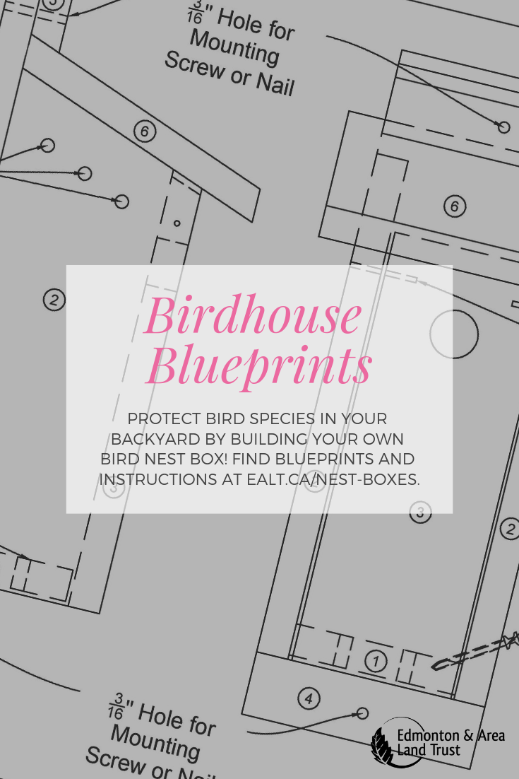 Learn How To Build A Birdhouse Designs For A Birdhouse That Can Be Used Year After Year Different Nest Box Designs For D Nesting Boxes Nest Design Blueprints