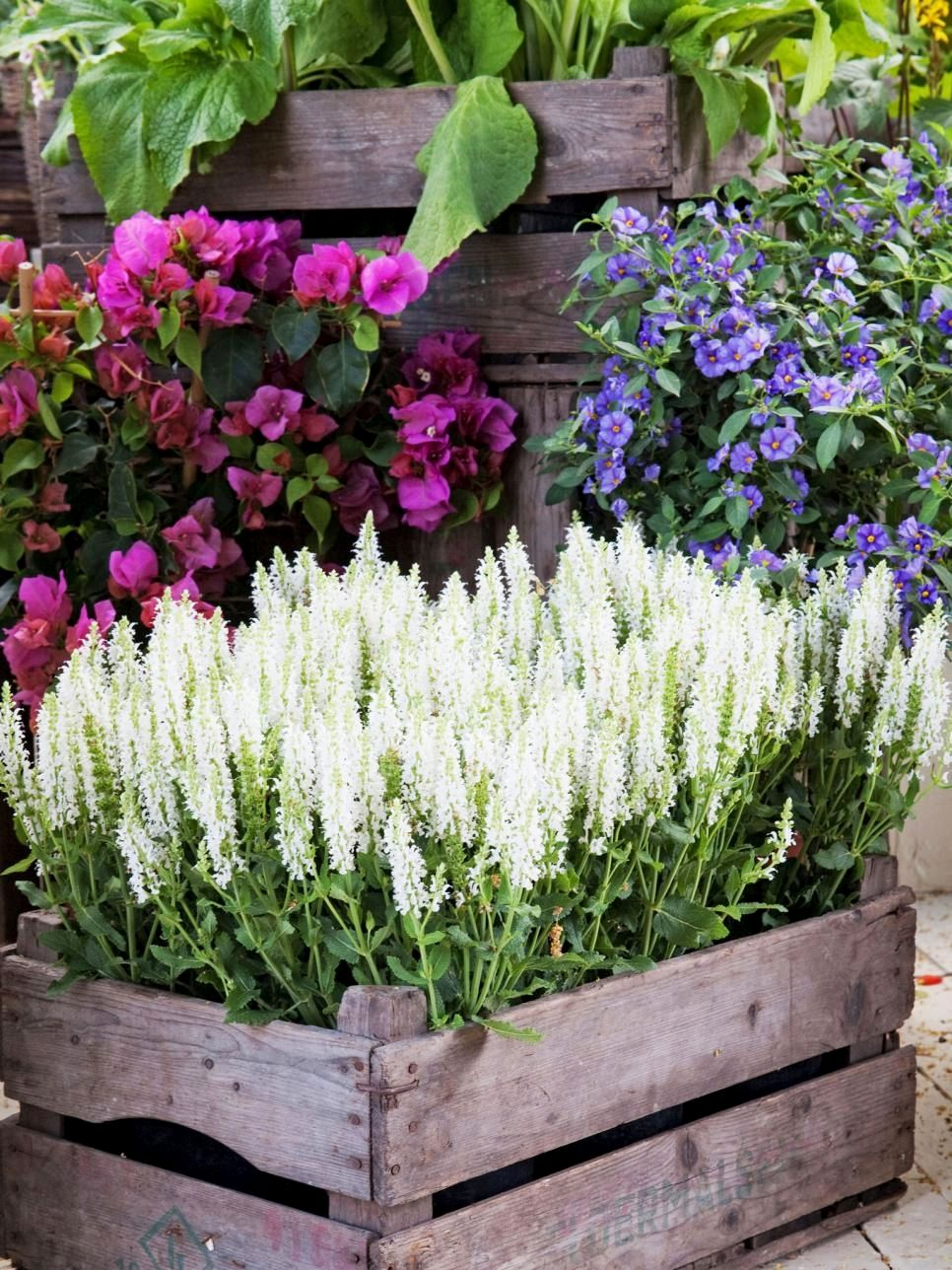 Beautiful container garden designs you might try for your patio