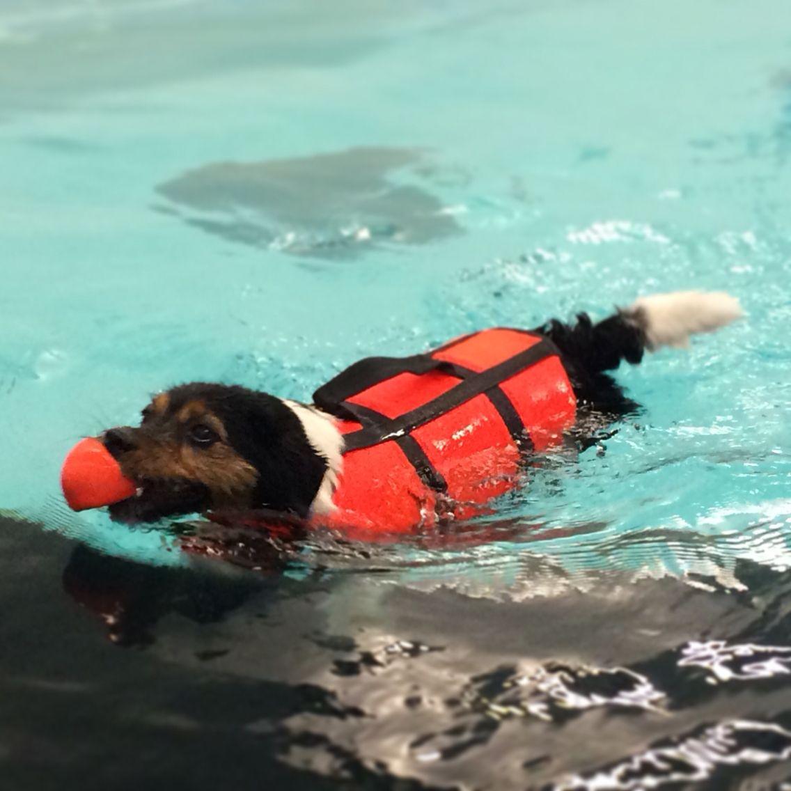 Telma uimassa koirauimalassa.