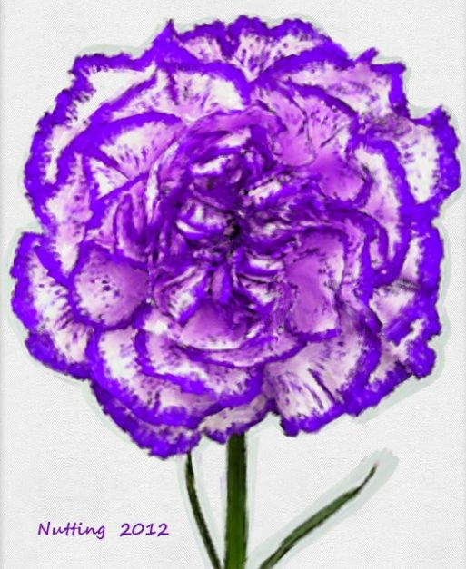 Purple Carnation Carnation Tattoo Flower Tattoo Shoulder Carnation Flower