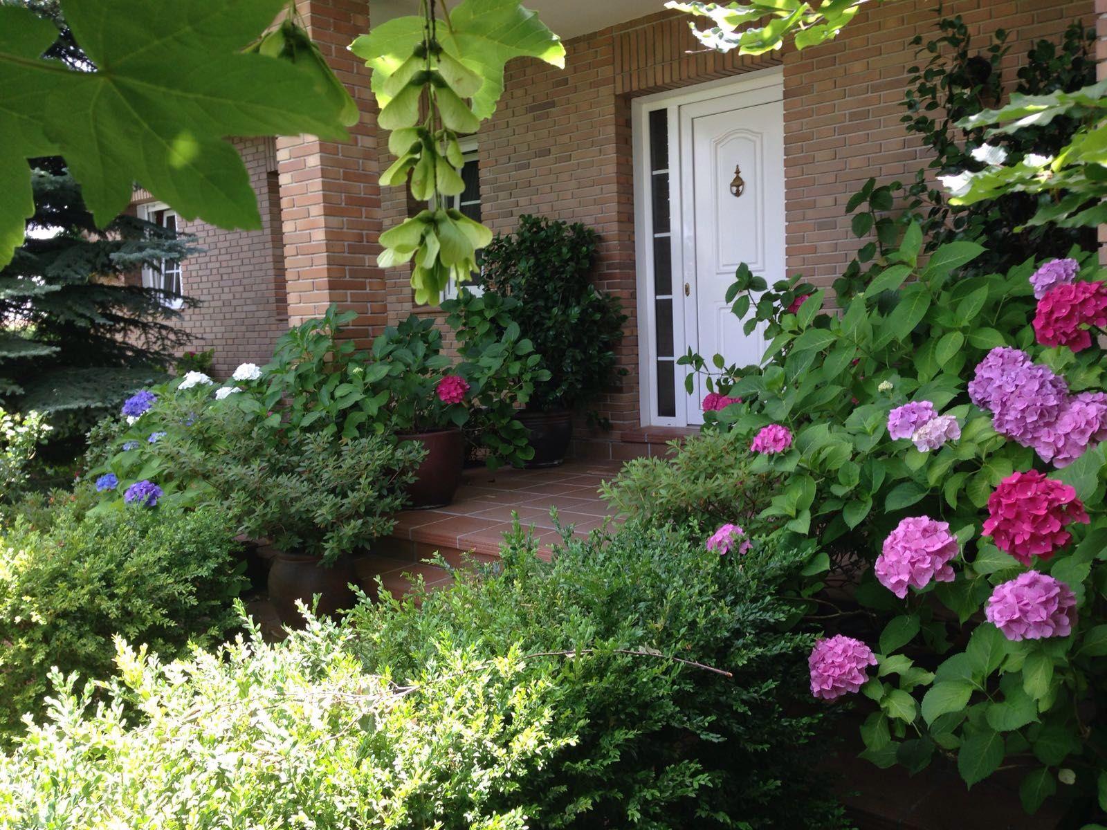 entrada a chalet de la sierra de madrid boj y hortensias
