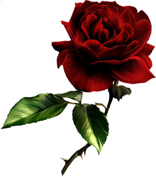 Painted Red Rose Clipart Wedding Rose Clipart Red Roses Rose