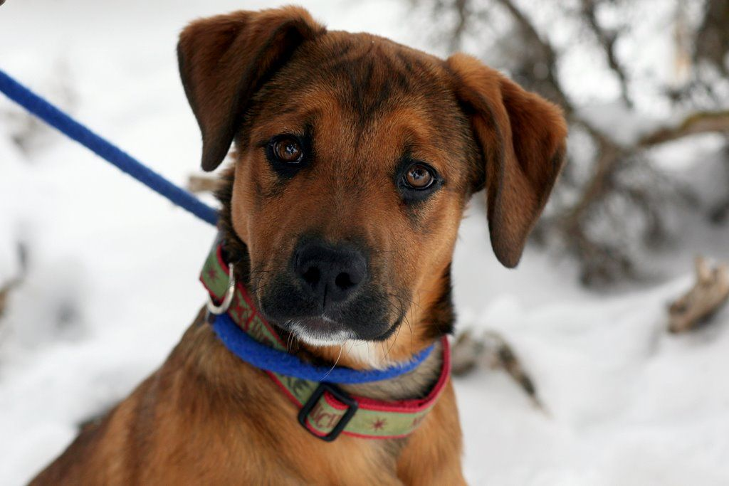 Shelter puppy Maple 4 months old 8669479173 2801