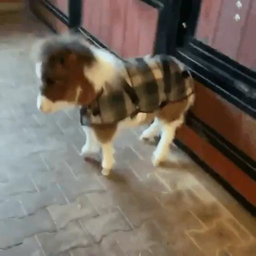 Ready to go outside and play