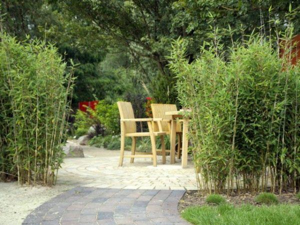 Fargesia 'Blue Lizard'® Bambushecke, Bambus und Bambus