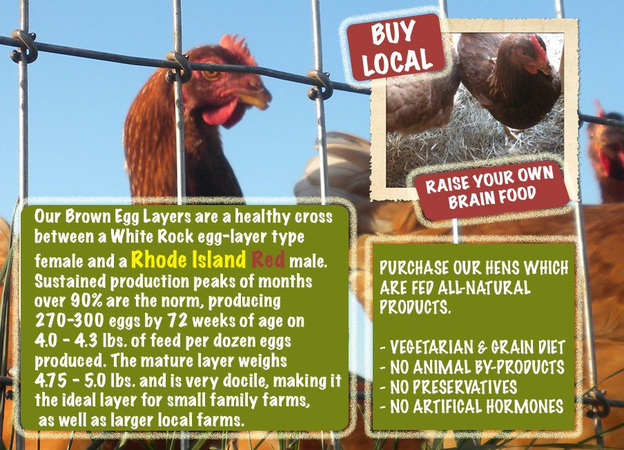 Farm Fresh Products Myfarmstand Com Ellington Ct Connecticut Chickens Connecticut Eggs Chickens 4 Sale Brown Eggs Chickens Rhode Island Red
