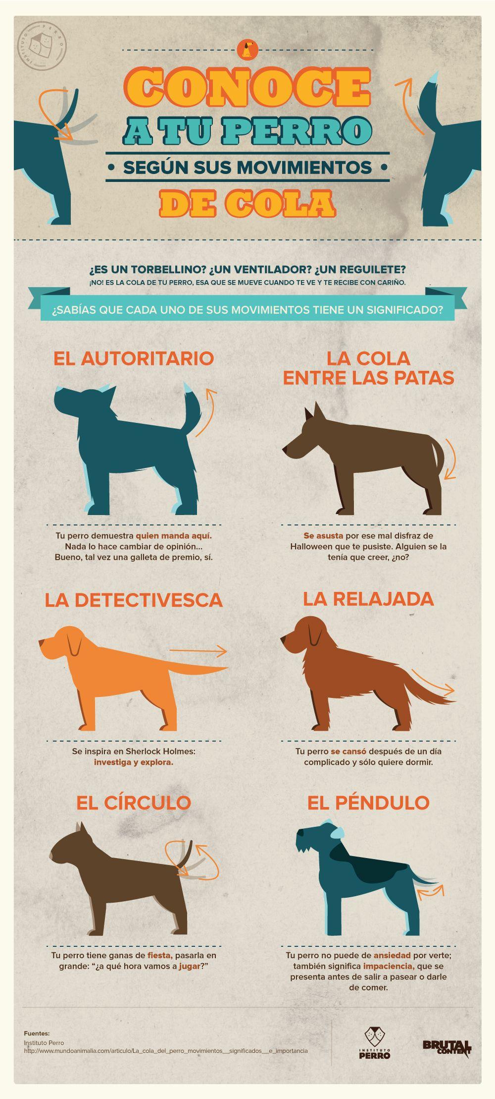 Resultado de imagen para infografia perro