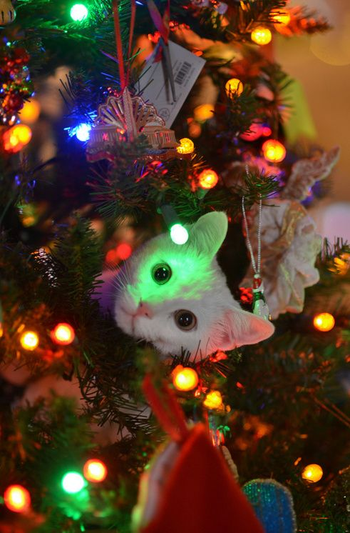 Cat Christmas Safety - Keep Your Cat Safe   wwwcat-world