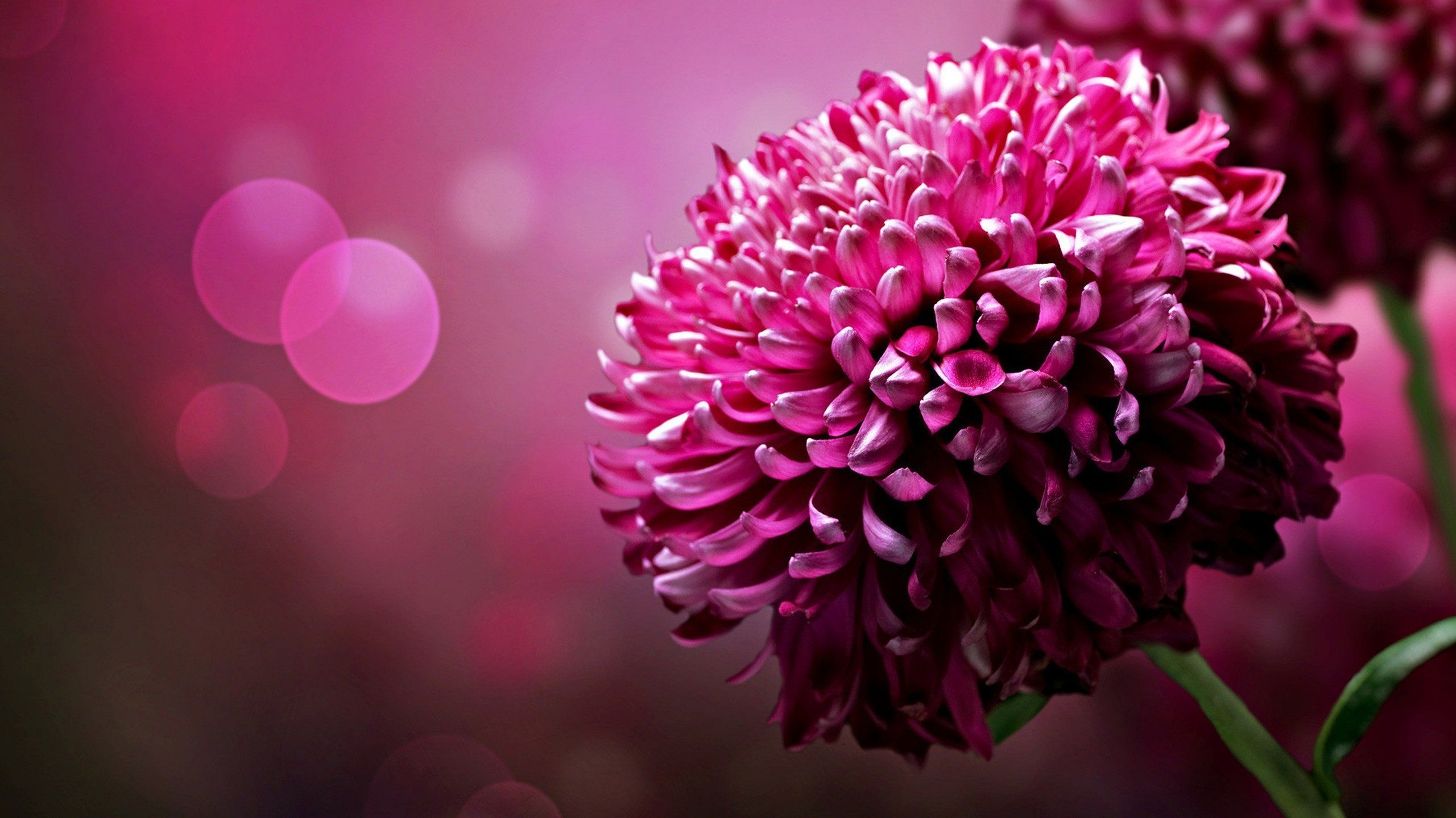 Beautiful flowers wallpapers group wallpapers of beautiful