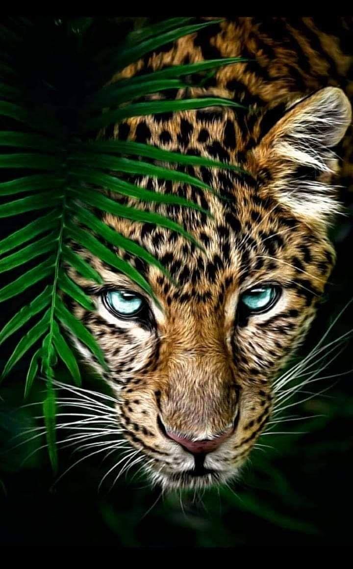 Pin By Haris Basuki On Animals Jaguar Animal Wild Animal Wallpaper Animals