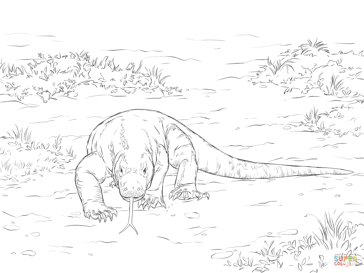 Walking Komodo Dragon Dragon Coloring Page Komodo Dragon Super Coloring Pages