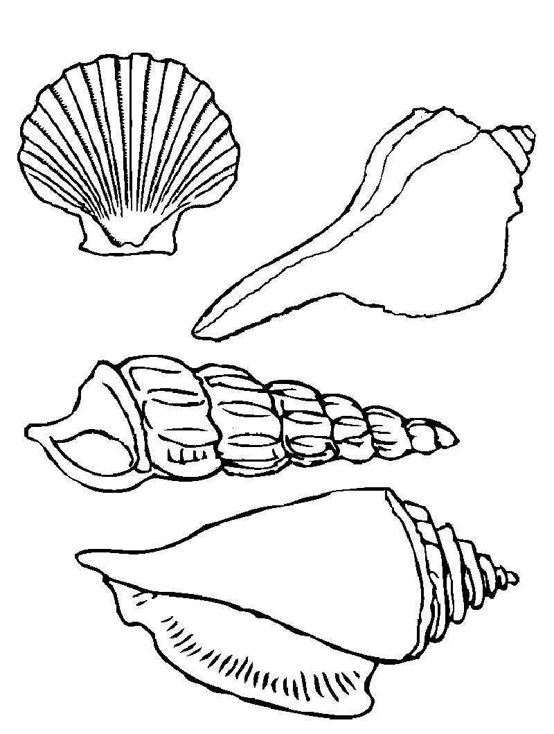 This is an image of Seashell Printable throughout clam shell