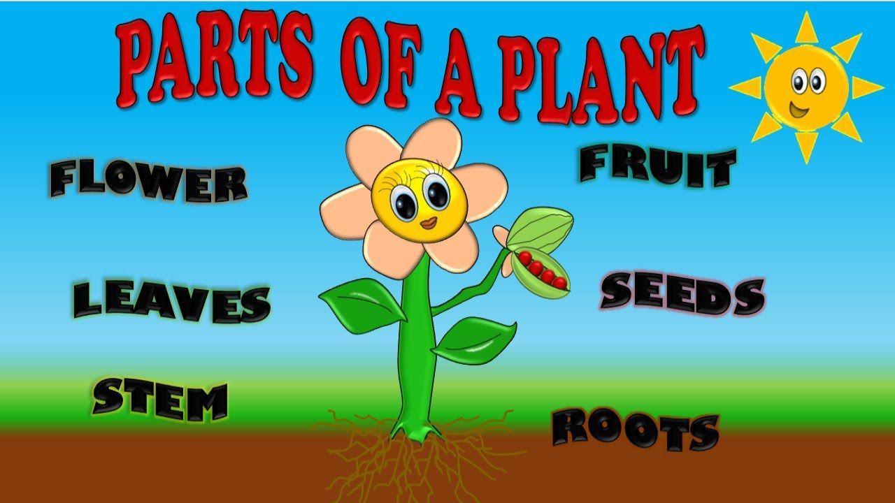 Parts Of A Plant For Kids Partes De Planta En Ingles Para Niños Partes De La Planta Cultivos Para Niños Partes De La Misa