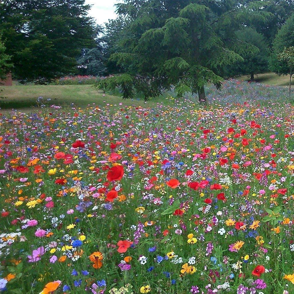 5kg 100 Pure Wild Flower Ornamental Meadow Premium Seeds