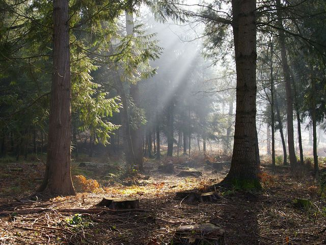 7 Magical Harry Potter Destinations Forest Beautiful Forest Forest Wallpaper
