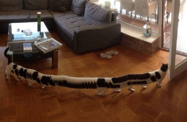 Cat turns into a cat-erpillar after walking through a panoramic photo