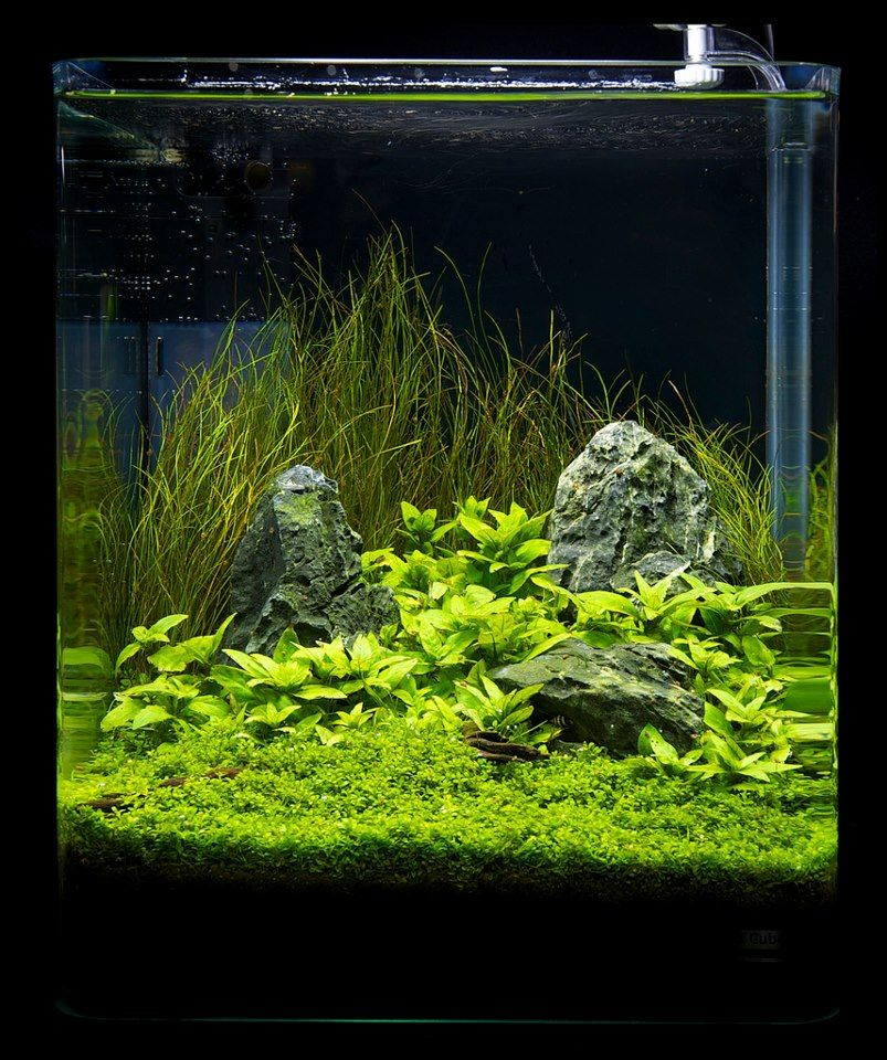 Simple but pleasing nano setup aquascaping layout for Planted fish tank