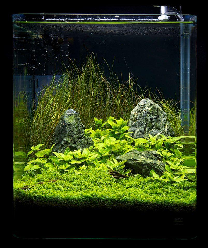 Simple, But Pleasing Nano Setup