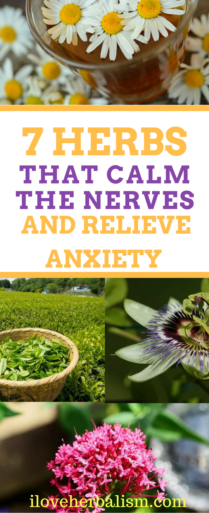 7 herbs that calm the nerves and relieve anxiety naturally | herbal