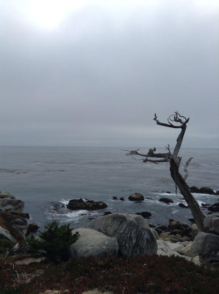 Een dor boompje staat langs de kant van de oceaan.