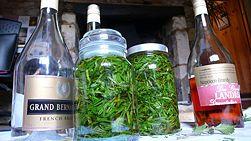 Make an Herbal Tincture