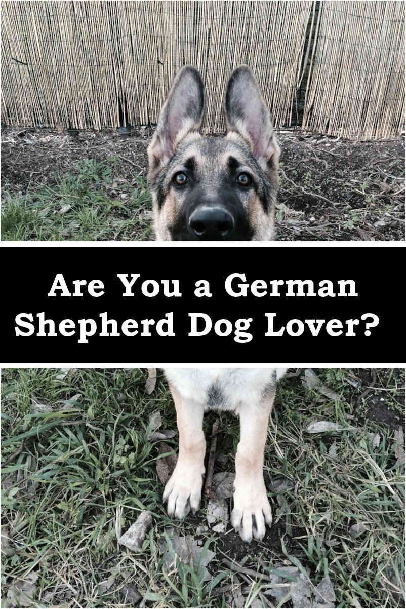 Training Your German Shepherd Dog German Shepherds German