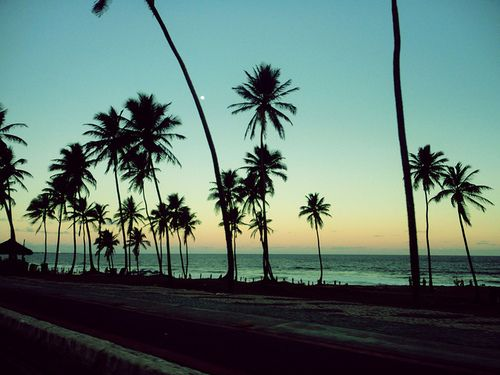 Cali California Beach Ocean Palm Trees Sunset Tree The
