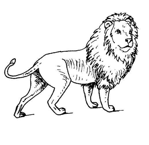 Free Printable Coloring Pages Lion King Of The Jungle Check Out Our Other