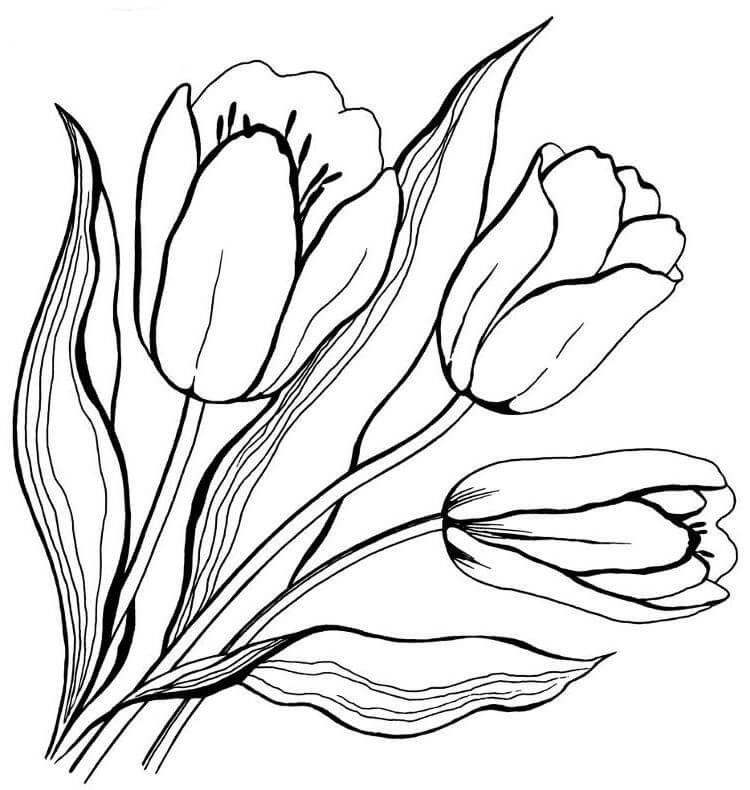 Pin By Jovita Cerniauskaitė On Sablonai Watercolor Flower Art Watercolor Flowers Paintings Tulip Drawing