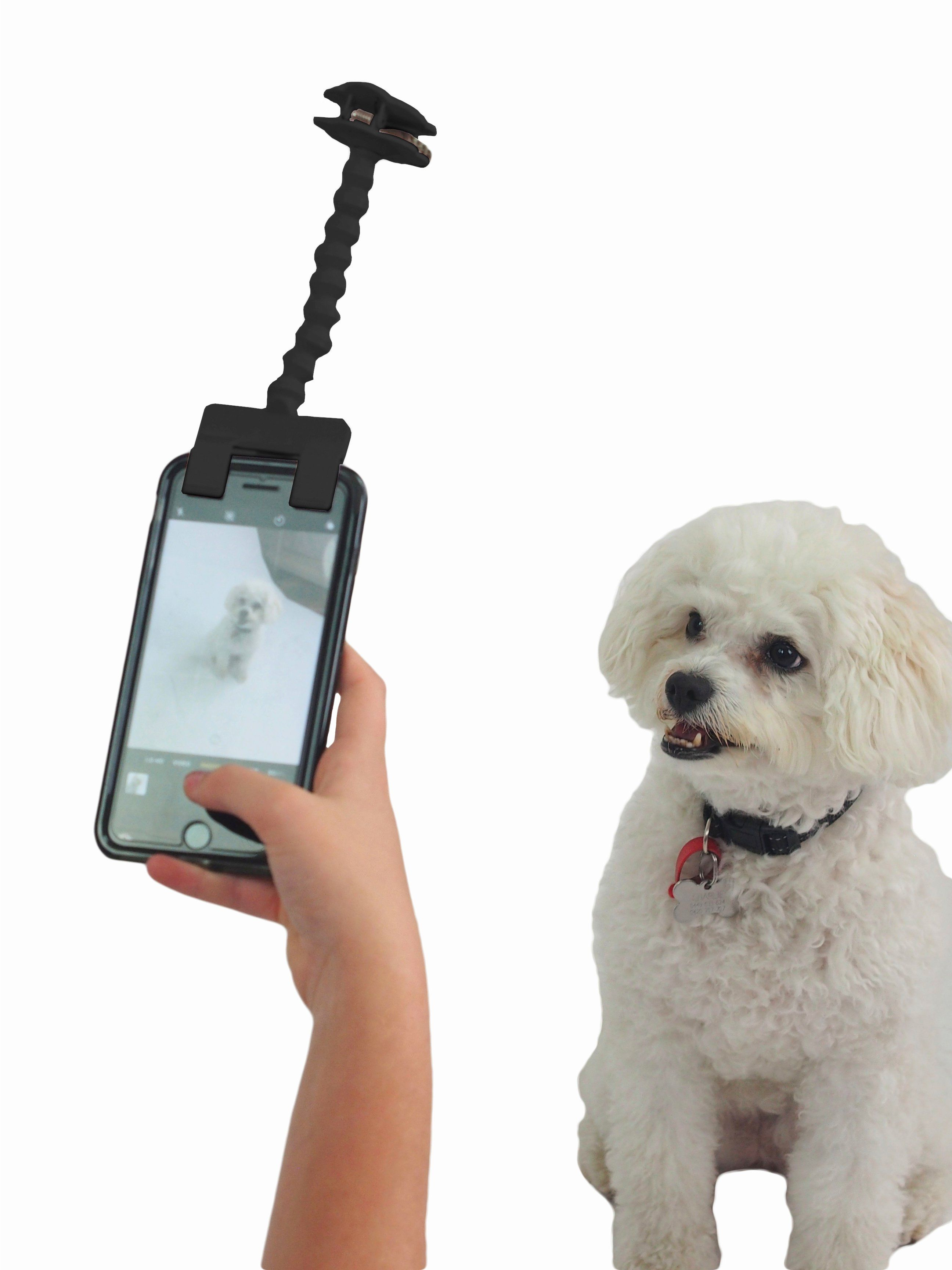 Are You Looking For That Pawfect Gift For Yourself Or A Dog Lover