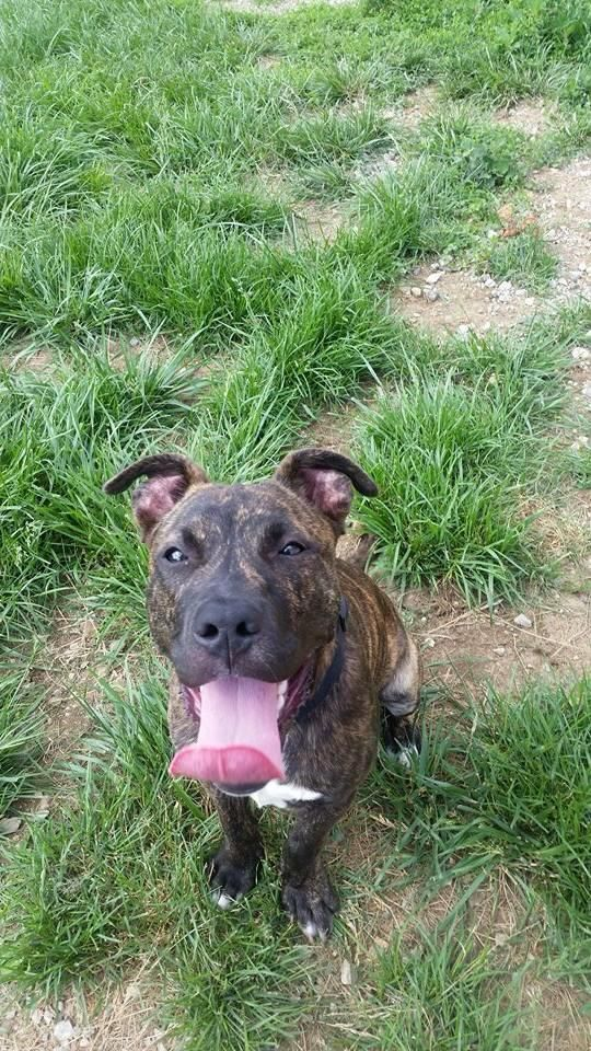 Griffey Available From Adopt A Pit Rescue In Germantown Ohio Dogs Animals Adoption