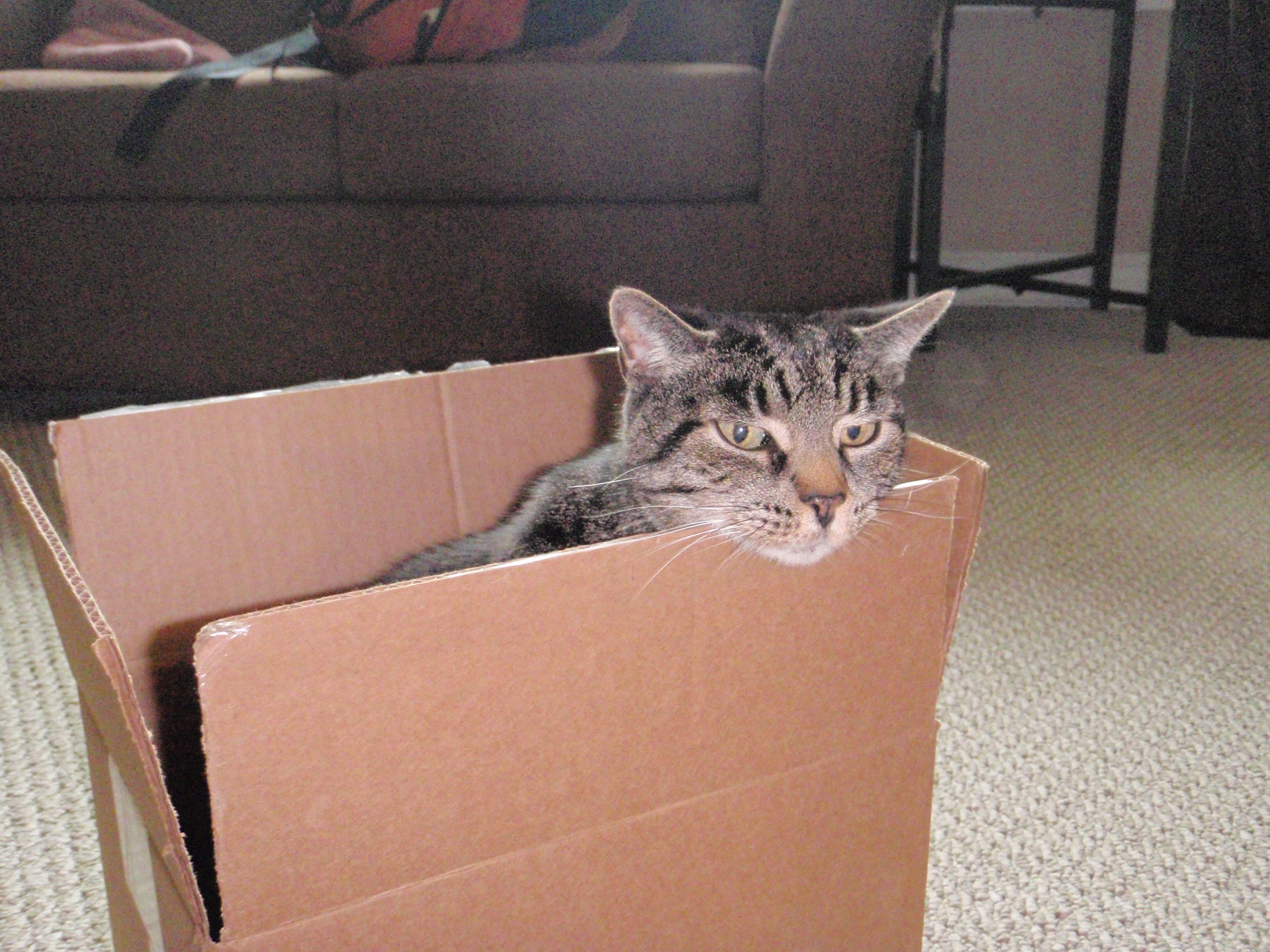 How to catch a cat 1 get a box cats