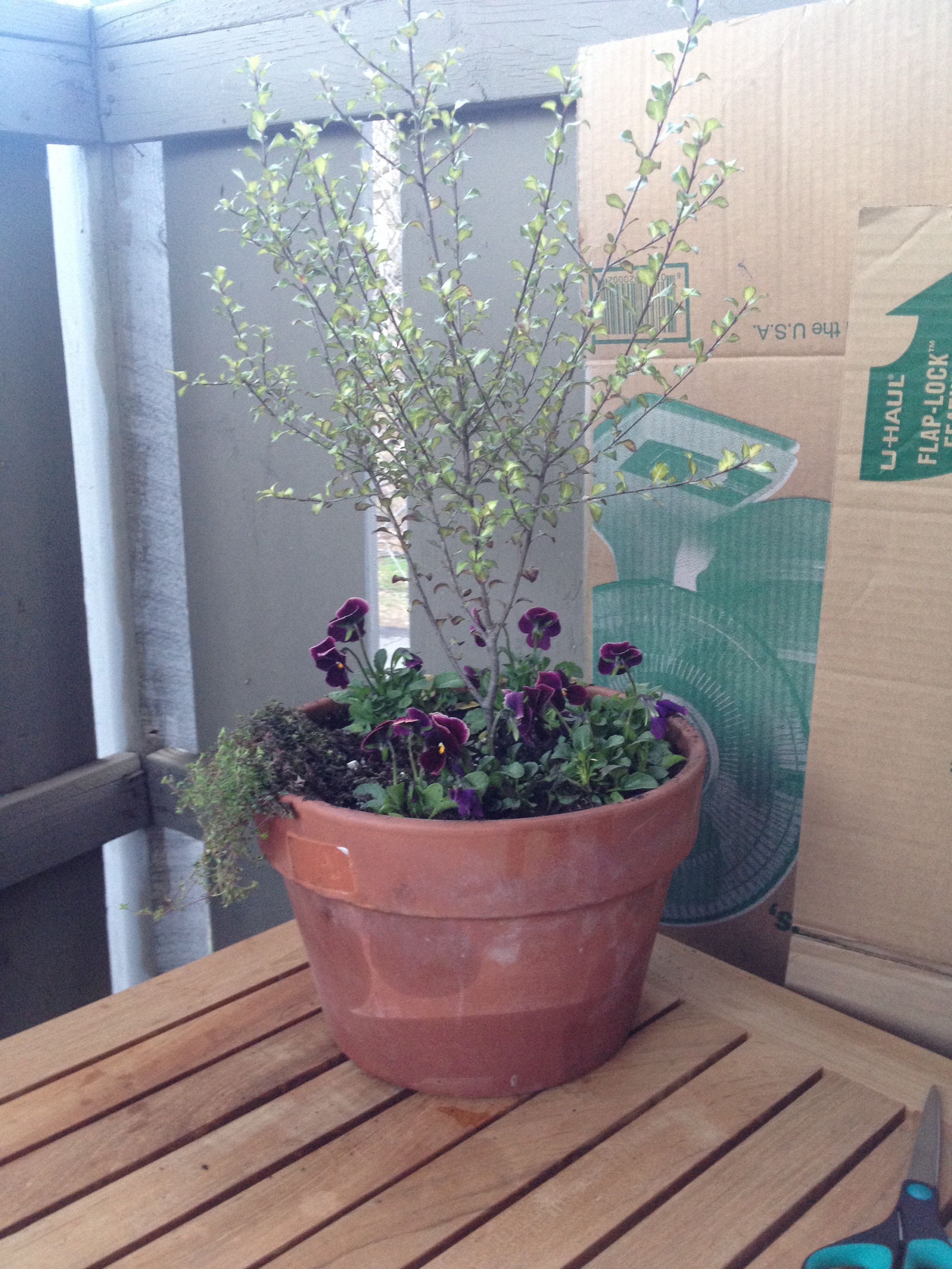 Mini tree for an apartment balcony #apartment #gardening ...