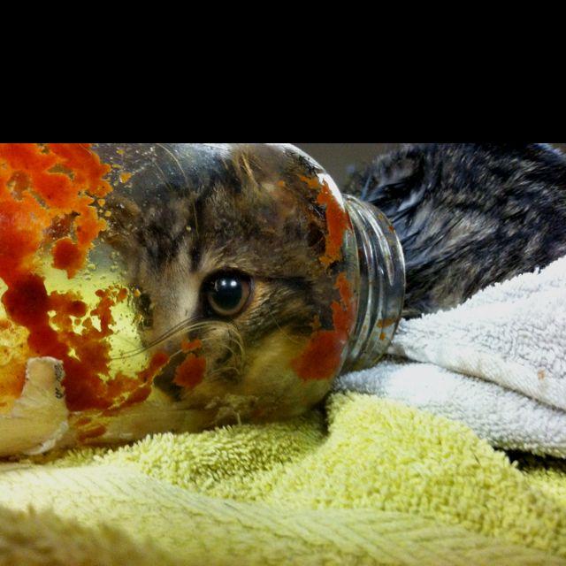 Kitty in a jar