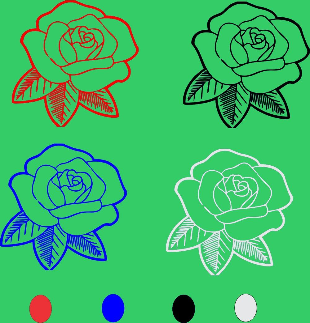 Download Gambar Bunga Mawar Hitam Putih Mawar Hitam Gambar Bunga Gambar