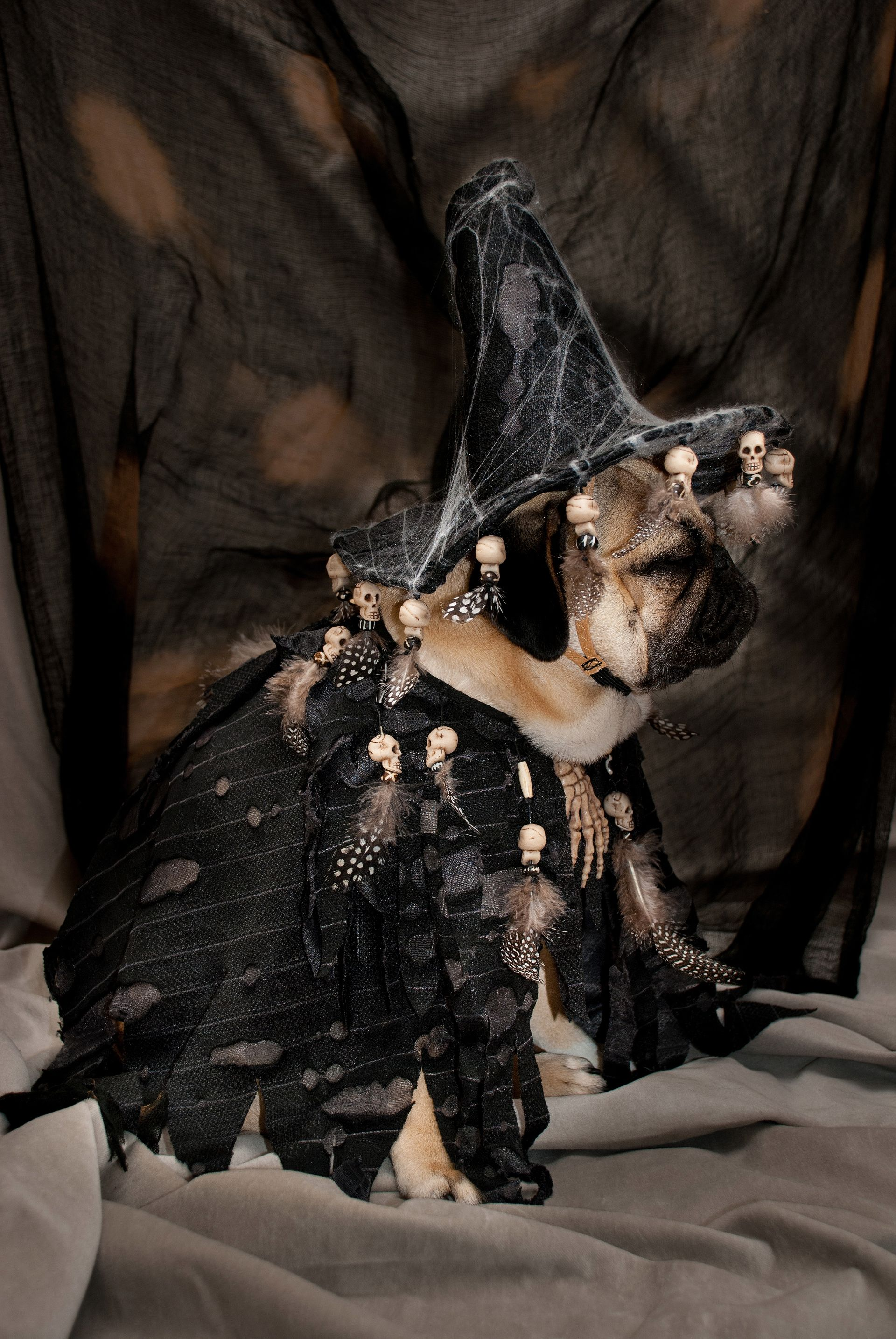 Creepy Canines: Pet Pugs Are Given Halloween Makeover By Owners