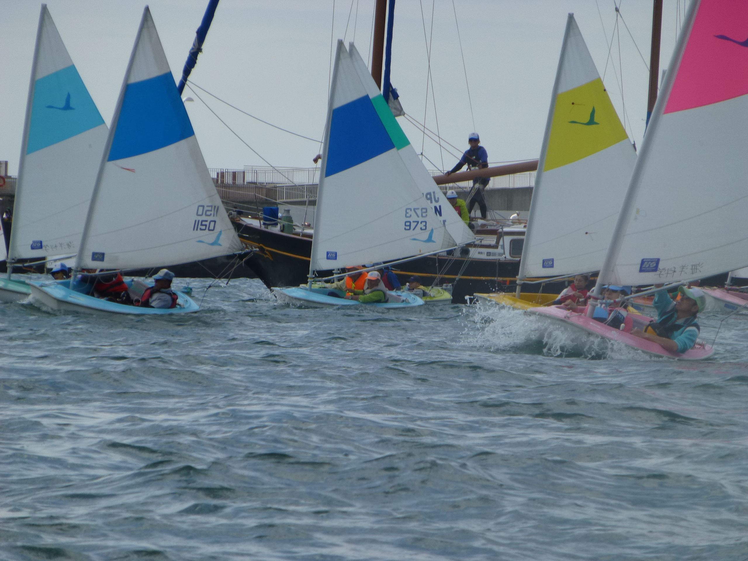 Sailability Enoshima regatta