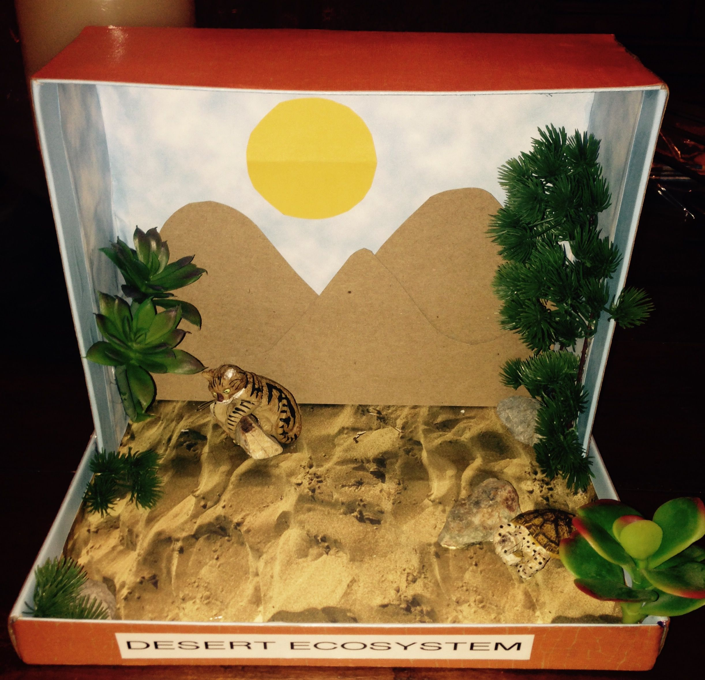 Desert Ecosystem Shoe Box | School Projects | Biomes ...