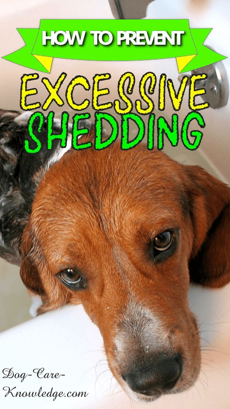 Excessive Dog Shedding How To Spot And Prevent It Dog