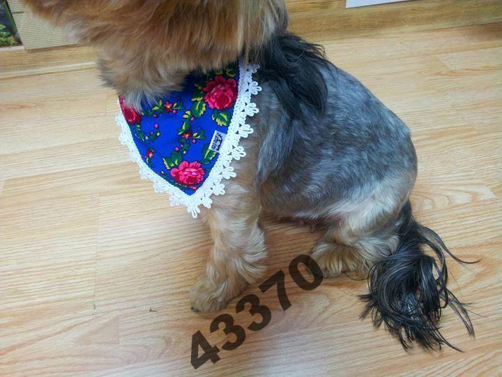 Pelo Apaszka Chustka W Stylu Ludowym Zakopianka 4027966049 Oficjalne Archiwum Allegro Animals Dogs