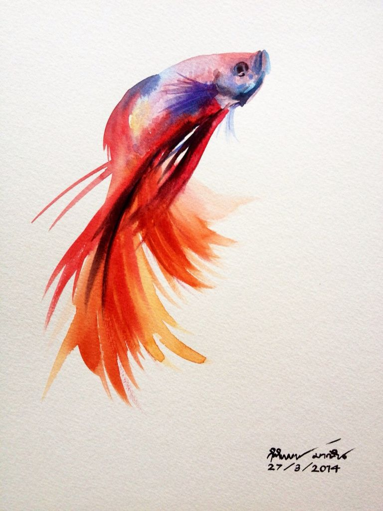 Beta Fish Fish Drawings Watercolor Fish