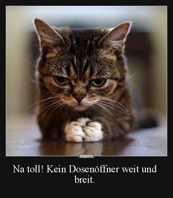 Besten Bilder, Videos und Sprüche und es kommen täglich neue lustige Facebook Bilder auf DEBESTE.DE. Hier werden täglich Witze und Sprüche gepostet! #funnycatshirts